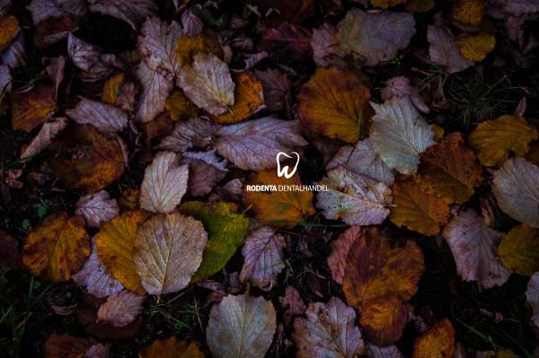 Leinwand - Motiv - Herbst