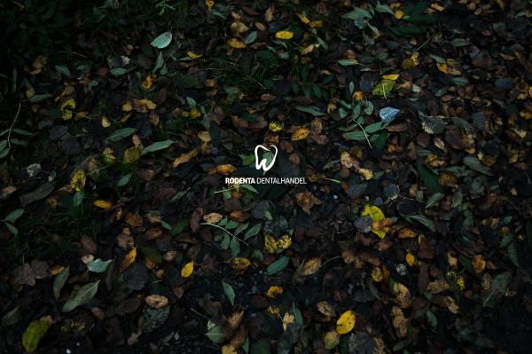 Leinwand - Motiv - Blätter